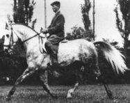 Trakehner horse Maharadscha