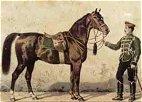 Schwaike horse